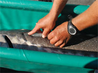 catch & release tagging program