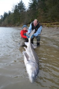 Fraser River Sturgeon Fishing March