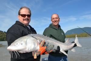 Sturgeon, White Sturgeon, Fraser River, Chilliwack, Vancouver, Pitt River