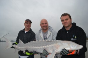 Fraser River, Sturgeon, Vancouver, Chilliwack, White Sturgeon, Fishing Guides