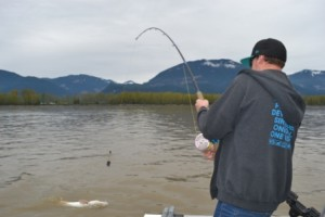 Vancouver Fishing, Fraser River, Fish Chilliwack, Sturgeon, Fishing Trips