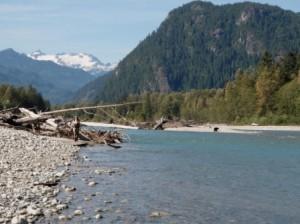 Pitt River, Bears, Vancouver, Chilliwack, Fly Fishing, Fishing Trips, Charters