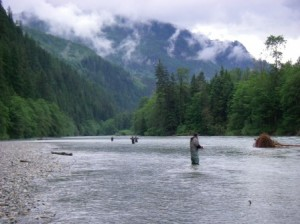 Pitt River, Fly Fishing, Vancouver, Fishing, Bull Trout, Chilliwack, Fishing Trips