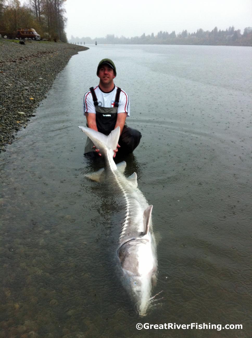 Fishing report vancouver fraser valley 10 11 12 for Fraser river fishing