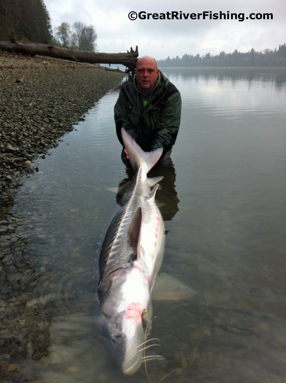 Fishing report vancouver fraser valley 26 11 12 for Fraser river fishing