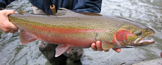 Fishing Report – Vancouver & Fraser Valley 21-12-12