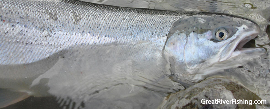 Fishing Report – Vancouver & Fraser Valley 30-01-13