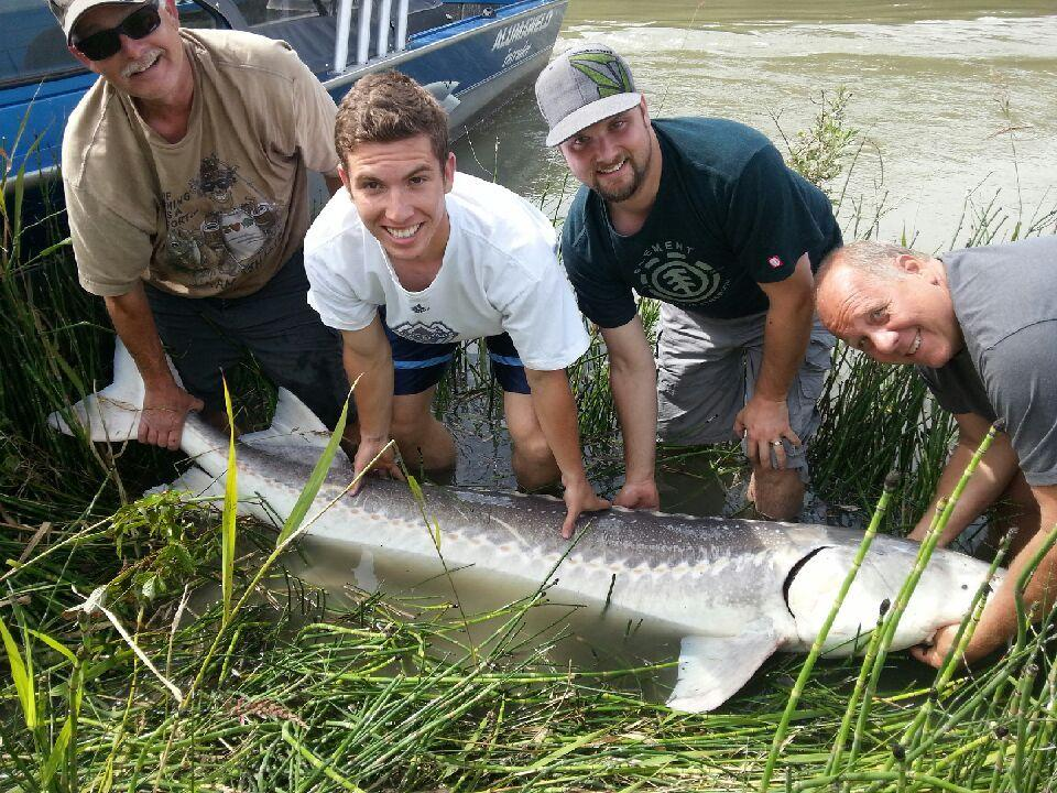 Fishing report vancouver fraser valley 06 27 13 for Sturgeon fishing report