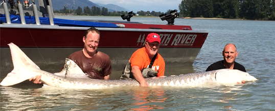 Fishing Report for Chilliwack to Vancouver – August 6, 2015