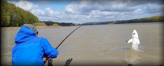 Fishing Report for Chilliwack to Vancouver – May 23, 2018