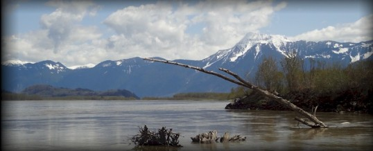 Fishing Report for Chilliwack to Vancouver – July 1, 2018
