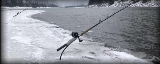 Fishing Report for Chilliwack to Vancouver – February 20, 2021